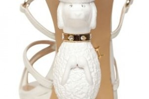poodle on heel of shoes
