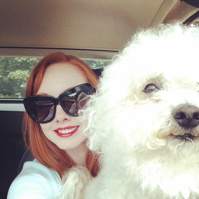 Just been for his regular checkup: passed with flying colours :). #dog #doglover #dogstagram #bichon #bichonfrise #redhead #redhair