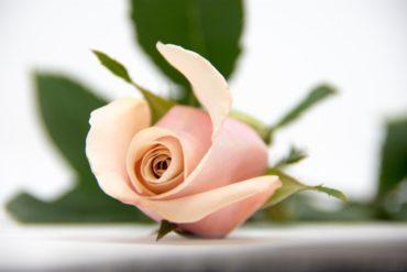 Best Organic Rose Water